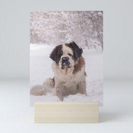 St Bernard dog on the snow Mini Art Print
