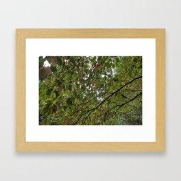 Longwood Gardens Autumn Series 14 Framed Art Print