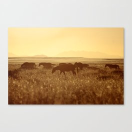 Horse Group in sidelight Canvas Print