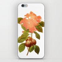 botanical iPhone & iPod Skins featuring Botanical by CAB Architects