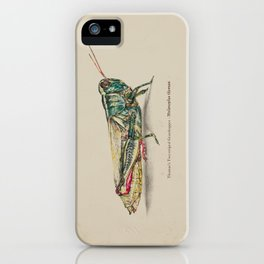 Thomas's two-striped Grasshopper - Melanoplus Tomasi iPhone Case