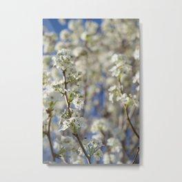 Flowering Pear Tree Metal Print