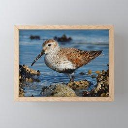 Bird on the Beach / A Solitary Dunlin Framed Mini Art Print