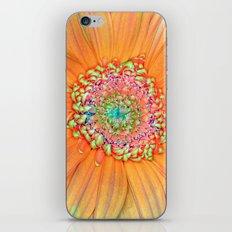 Daisy Tones iPhone & iPod Skin