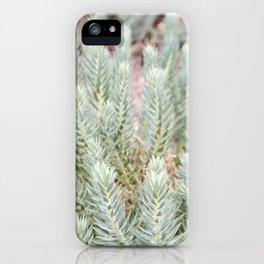 Succulent IIII iPhone Case