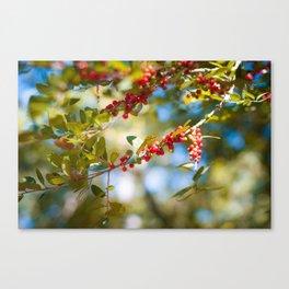 Fall bloom Canvas Print