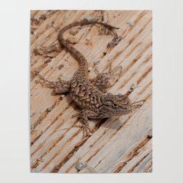 Plateau Fence Lizard, Utah Poster
