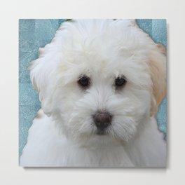 Cute Puppy Metal Print