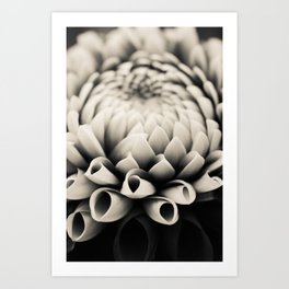 Moody Dahlia - Modern Dahlia Botanical Photo - flower print Art Print