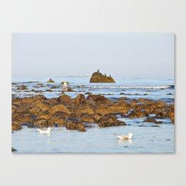 White Island lighthouse Canvas Print
