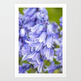 Blue Blue Bluebells Art Print