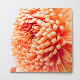 Orange Germini Close Up 3 Metal Print
