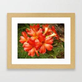 Vireya Flame Framed Art Print