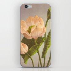 BOTANICAL STILL LIFE - NELUMBIUM SPECIOSUM iPhone & iPod Skin