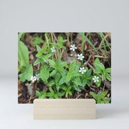 Many Mini Wildflowers Mini Art Print
