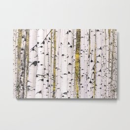 Aspens of Aspen Metal Print