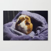guinea pig Canvas Prints featuring My brothers guinea pig by Jamie de Leeuw