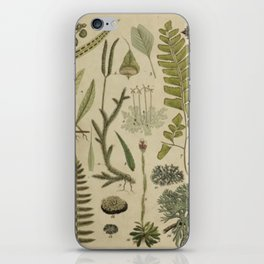 Ferns And Mosses iPhone Skin