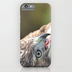 Red Tailed Hawk Close Up iPhone 6s Slim Case