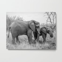 Grazing Elephants Metal Print