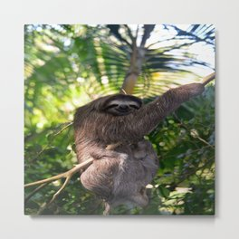 Three toed Sloth Metal Print