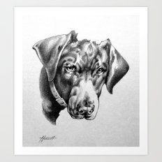 You're Kidding : Black Labrador Art Print