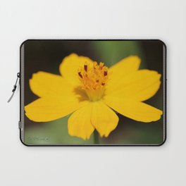 Cosmos Sulphureus named Ladybird Dwarf Lemon Laptop Sleeve