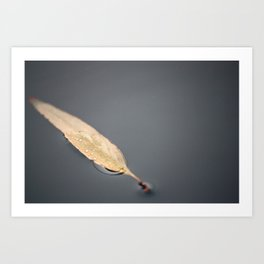 A Floating Leaf Art Print
