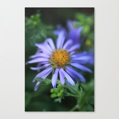 Blossom 2 Canvas Print