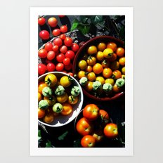 Yellow and red tomatoes I Art Print