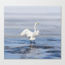 Swan lake in THE spring in THE North of Sweden Canvas Print