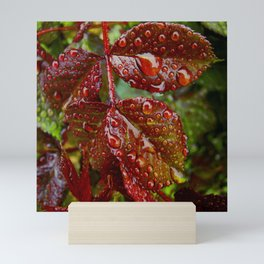 Rose Leaves After Rain Mini Art Print