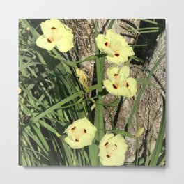 Pretty Yellow Flowers Nestled in Blades of Grass Metal Print