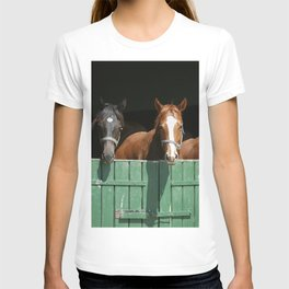 Close-up face of horses in stable.The horse is looking out from behind green wooden fence of the barn at rural animal farm summertime. T-shirt