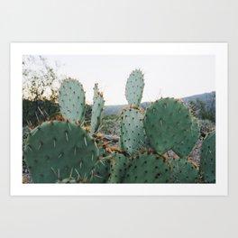 Arizona Prickly Pear Art Print
