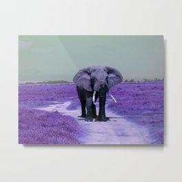 African Bull Elephant in Purple Metal Print