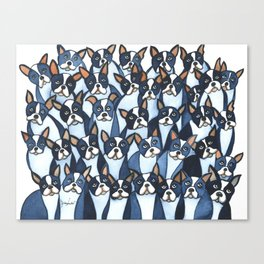 Many Boston Terriers Canvas Print
