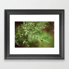 Pine Mist Series: 2 Framed Art Print