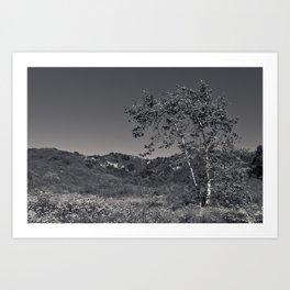Black Oak Art Print