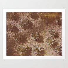 Succulents Caught on Film Art Print