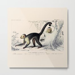 Vintage Capuchin Monkeys Metal Print