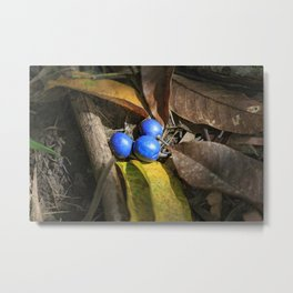 Gifts of the Forest Metal Print