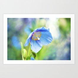 Blue Poppy Flower Art Print