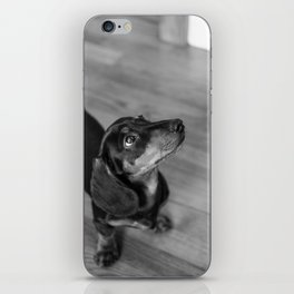 Weenie Dog iPhone Skin