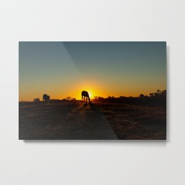 Silhouettes of horses at sunset in the field. Long shadows in the golden hour. Metal Print