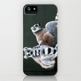 Ring Tailed Lemurs iPhone Case