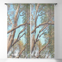 Madrone Sheer Curtain