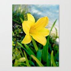 Vibrant Lily Canvas Print