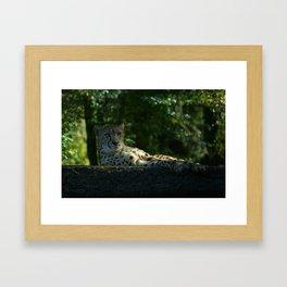 Resting Cheetah Framed Art Print