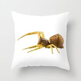 goldenrod crab spider species Misumena vatia Throw Pillow